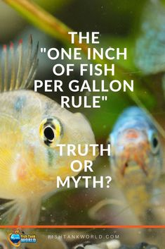 A classic rule for stocking your aquarium. Is it true or a myth when it comes to choose the fish for your tank? Tropical Fish Aquarium, Aquarium Fish Tank, Planted Aquarium, Freshwater Plants, Freshwater Aquarium Fish, Goldfish Care, Cichlid Aquarium, Betta Fish Tank, Fish Tanks