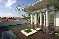 tropical architecture   Modern Tropical Houses Singapore   SG Livingpod