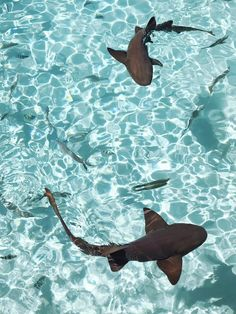 A day In the Exumas (swimming with pigs and nurse sharks in the Bahamas) - Cravings in Amsterdam Collage Mural, Bedroom Wall Collage, Photo Wall Collage, Picture Wall, Strand Wallpaper, Ocean Wallpaper, Summer Wallpaper, Shark Wallpaper Iphone, Blue Aesthetic Pastel