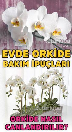 # Gardening in pots Evde Orkide Bakımı Orchid Plants, Garden Plants, Indoor Plants, House Plants, Spring Tutorial, Plant Breeding, Cactus, Growing Orchids, Succulents