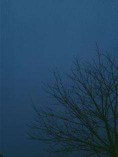 #night #blue #tree #branches #minimal #landscape #sky #vscocam #vsco