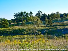 Late Summer Savanna Landscape - Shaw Nature Reserve - #inspiration