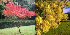 5 preciosos árboles para jardines pequeños