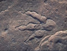 Triassic dinosaur footprint S Wales Wales Beach, Fossil Hunting, The Lost World, Ice Age, Footprint, South Wales, Twitter