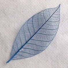 technique for skeletonized leaves