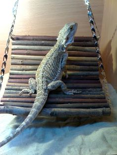 Bearded Dragon Toys: Because our favourite reptiles CAN get bored! I'll hold my hand up, my dragons are spoilt. Dragon Pet, Dragon Horse, Baby Dragon, Bearded Dragon Habitat, Bearded Dragon Cage, Bartagamen Terrarium, Reptile Terrarium, Terrarium Ideas, Bearded Dragon Enclosure