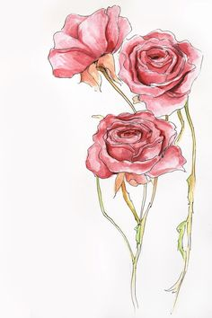 watercolor rose painting | Tumblr
