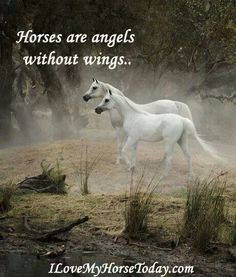 Look at these gorgeous Arabian horses with a beautiful quote. So true!! :)