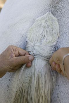 How to Braid a Horse's Tail for Hunter Competition