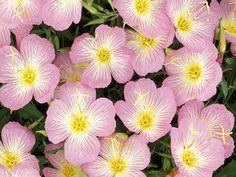♥QUIZ♥ 181 (HINT-COUNTY FLOWER OF DEVON)