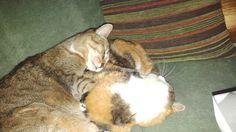 Hada y Luna durmiendo