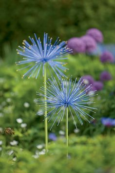 Everlasting Alliums - oversize steel orbs are painted in bright colors and each spike is tipped in gold for added sparkle. two diameter flower heads on slender steel stakes in two heights: and installed. From Gardener's Supply Metal Flowers, Beautiful Flowers, Black Flowers, Hydrangea Care, Arte Floral, Front Yard Landscaping, Stone Landscaping, Landscaping Ideas, Garden Supplies