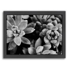 Succulents Framed Photographic Print