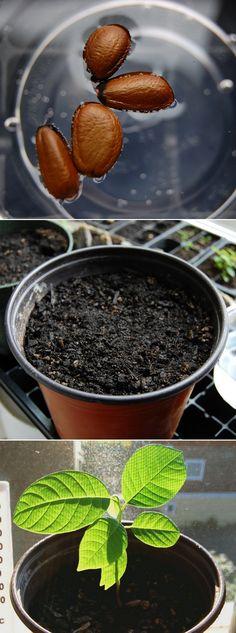 Alternative Gardning: Soak seeds before planting
