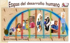 desarrollo humano psicologia etapas - Buscar con Google