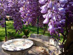 Gazebo delle Terme di Stigliano. #glicine #green #flowers #land