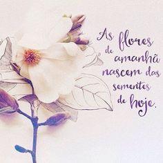 """Beijos...Semeadores que nascem com o dom de fazer florir, germinar, brotar....""""Todas as flores do futuro estão nas sementes de hoje""""?"""