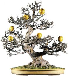Bonsai Fruit Tree, Bonsai Art, Bonsai Garden, Fruit Trees, Ikebana, Bonsai Pruning, Horticulture, Evergreen, Chinese