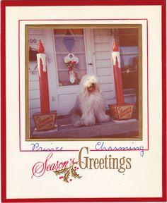 Prince Charming- 1950s Vintage Photograph- Christmas Photo Card- Old English Sheepdog- Holiday Decor- Season's Greetings- Paper Ephemera