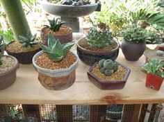 Container ideas for a succulent garden - lots of ideas in this link!