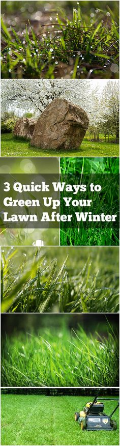 3 Quick Ways to Green Up Your Lawn After Winter (1)