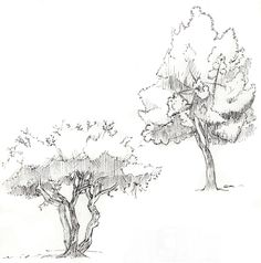 how to draw realistic forest - Google Search