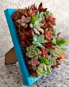Vertical Living Succulent Wall Hanging or Table Top in Turquoise. $27.00, via Etsy.