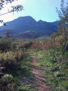 Helderberg Nature Reserve with a view of the majestic Helderberg Mountain (Photo David Floyd)