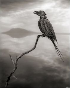 o-CALCIFIED-SONGBIRD-900  - Verkalkte dieren in Tanzania: SPOOKY  - Manify.nl