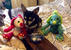 Dogs I made with my little chihuahua