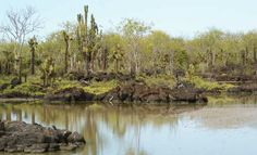 The lagoon on Santa Cruz -  Dragon Hill, Photo of Galapagos Islands - IgoUgo