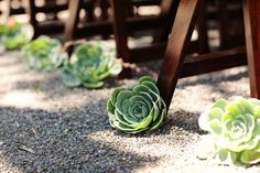 Ultimate Inspiration Guide for Succulents at your Wedding | Bridal Musings Wedding Blog 1  For the ceremony, along the aisle way + rose petals
