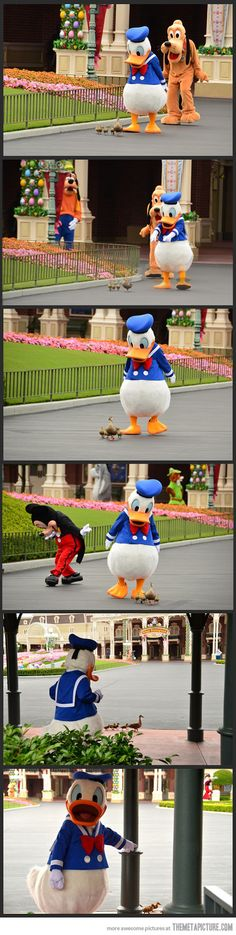 THIS IS TOO CUTE! i'm bringing ducks to disneyland