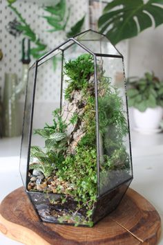 Terrarium Design - Fittonia and helxine baby tears were used along with fern and sheet moss. Terrarium Jar, Terrarium Plants, Succulent Terrarium, Succulents Garden, Hanging Terrarium, Terrarium Ideas, Cactus Plants, Bottle Garden, Glass Garden