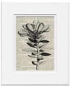18oo's wood engraving  an evergreen bush printed on par FauxKiss, $10,00