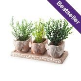 3 White-washed Terracotta Elephant Herb Planters $24.95 Oxfam Shop