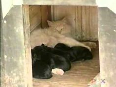 This Cat lost her Kittens, A Mom Dog Has Puppies And What Happens Next is Truly Amazing! - iHeartCats.com