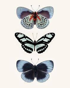 Arte grande farfalla blu grande stampa d'arte di RockyTopPrintShop, $95.00
