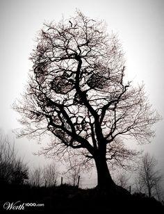 Google Image Result for http://www.designdazzling.com/wp-content/uploads/2011/01/tree-of-death-photomanipulation.jpg