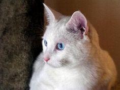 FreebieCat's Cat of The Day October 4, 2015 http://www.freebiecat.com/cat-of-the-day.php