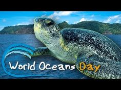 World Oceans Day (June 8th)  Celebrate World Oceans Day: Together We Have the Power to Protect the Oceans