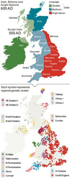 Britons still live in Anglo-Saxon tribal kingdoms, Oxford University finds. Image: A map to show regional genetic clusters from Irish, Britons and Anglo-Saxons Uk History, European History, British History, History Facts, Ancient History, Family History, Anglo Saxon History, American History, Scotland History