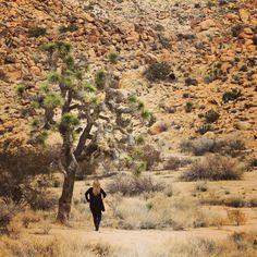 Joshua Tree (01.15) Grand Canyon, Art Photography, Nature, Travel, Image, Fine Art Photography, Naturaleza, Viajes, Trips