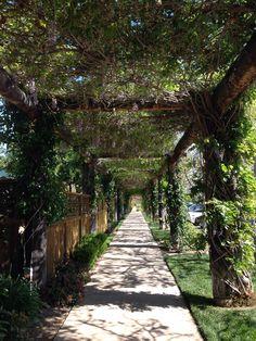 Walk in the winery, so pretty.