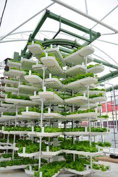 greenhouse - Pesquisa do Google