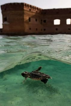 dry tortugas, fl