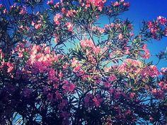 Arvore - Flor - Maravilha