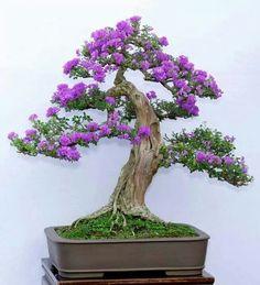Purple bonsai