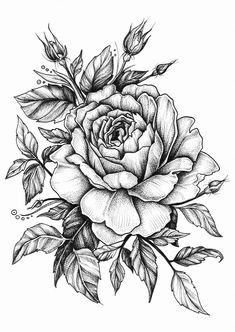 25 Beautiful Flower Drawing Information & Ideas - Zeichnungen - Tatoo Ideen Rose Drawing Tattoo, Tattoo Sketches, Tattoo Drawings, Rose Drawings, Pencil Drawings, Botanical Drawings, Pencil Tattoo, Drawing Drawing, Drawings Of Angels