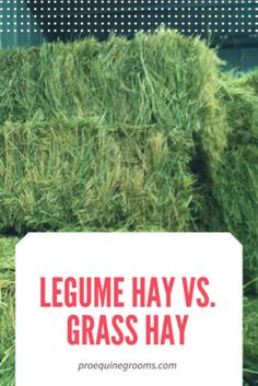 Horse Hay, Horse Feed, Grooming Shop, Horse Grooming, Hay Feeder For Horses, Largest Horse Breed, Feeding Goats, Types Of Grass, Gardens